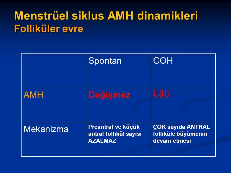 Menstrüel siklus AMH dinamikleri Folliküler evre