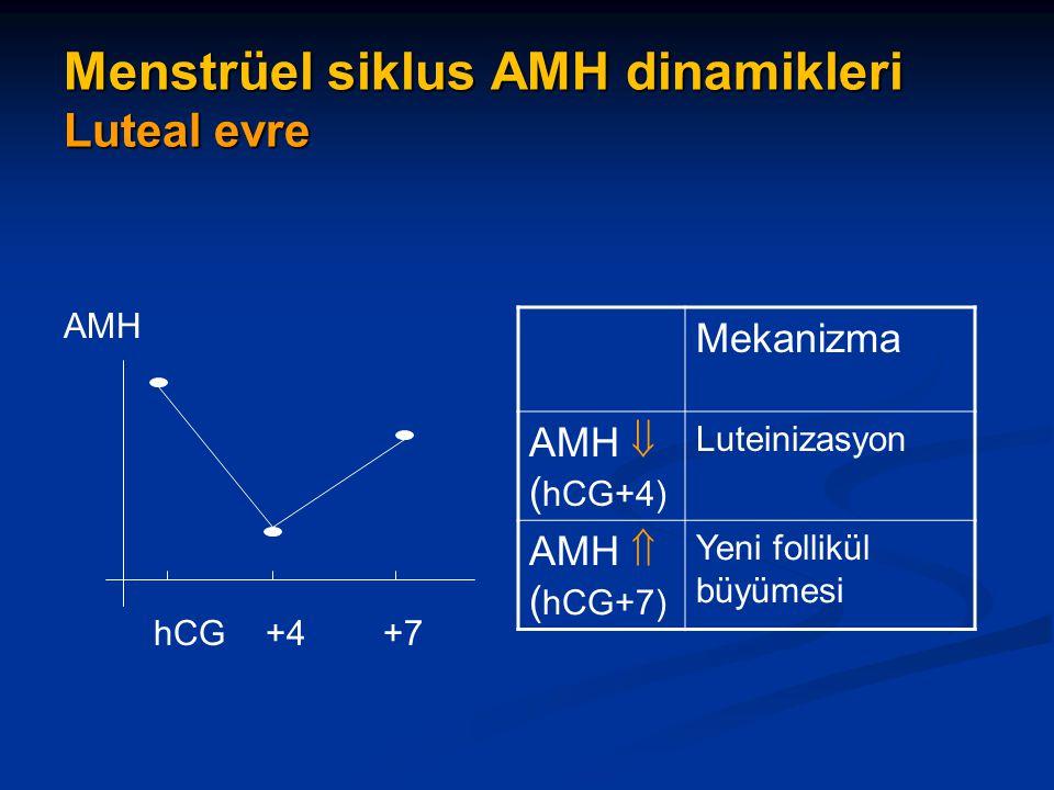 Menstrüel siklus AMH dinamikleri Luteal evre