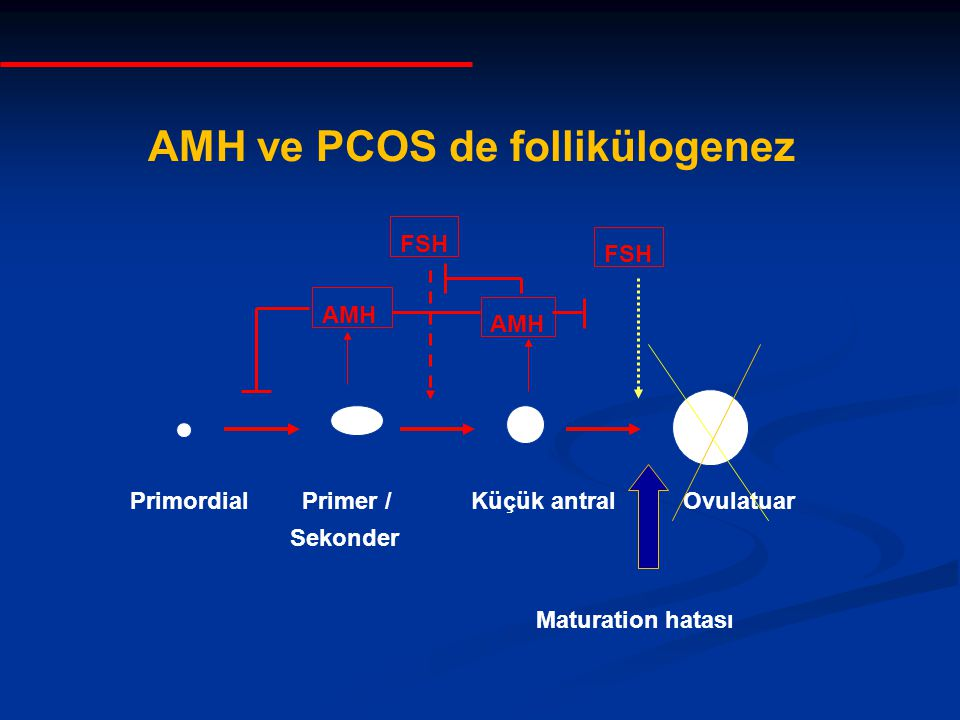 AMH ve PCOS de follikülogenez