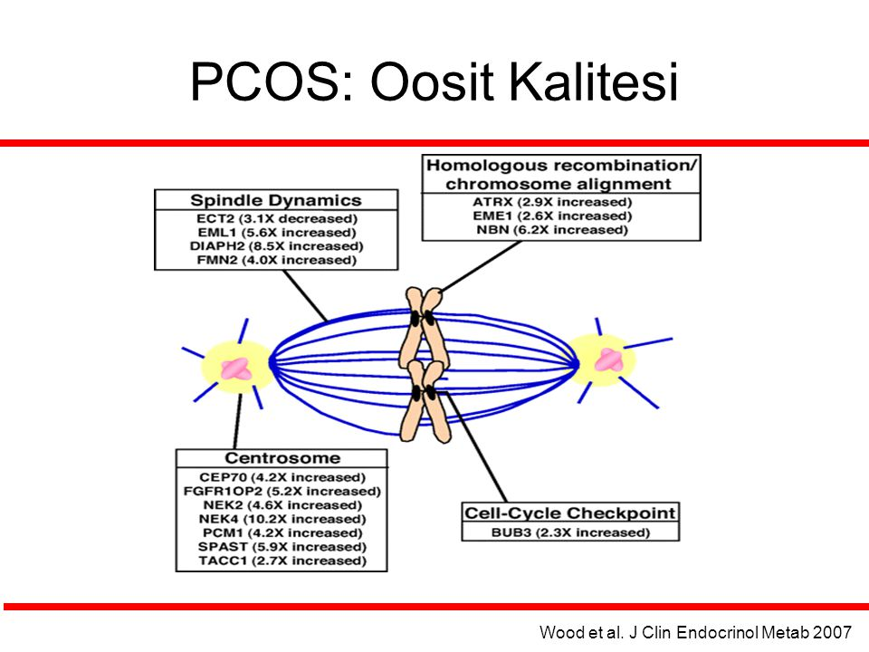 PCOS: Oosit Kalitesi Wood et al. J Clin Endocrinol Metab 2007