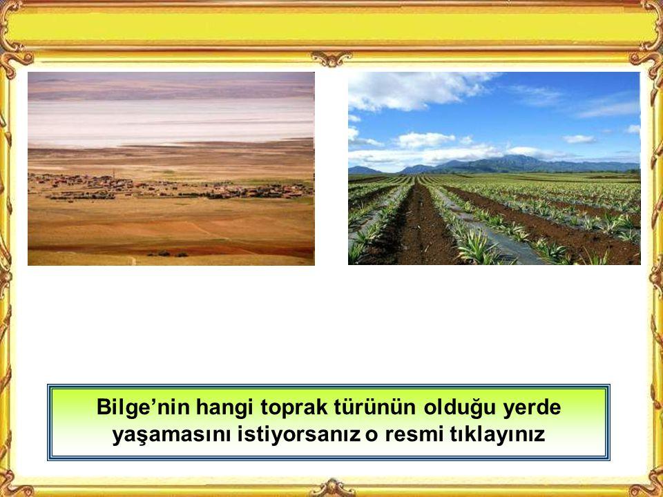 Bilge'nin hangi toprak türünün olduğu yerde yaşamasını istiyorsanız o resmi tıklayınız