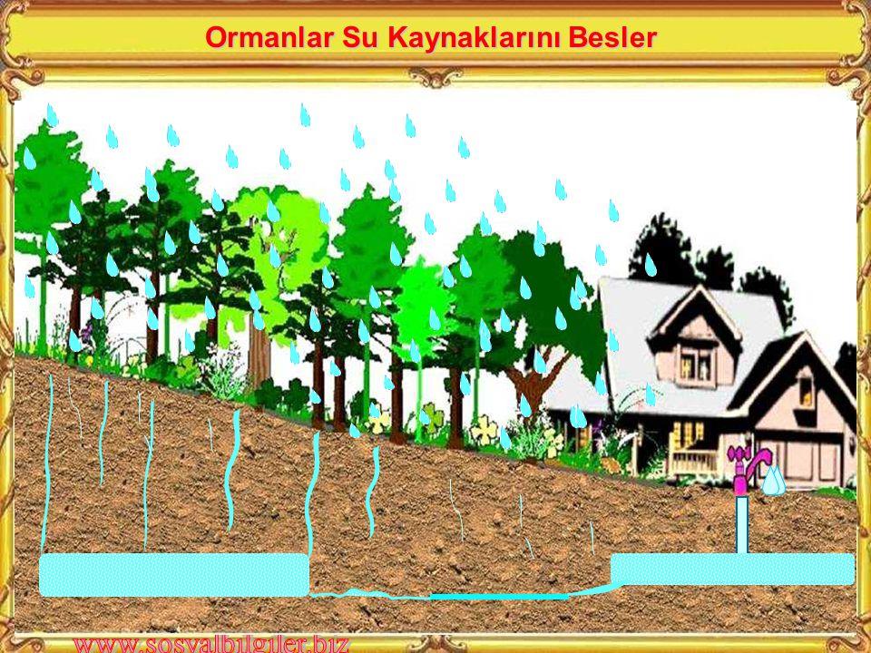 Ormanlar Su Kaynaklarını Besler