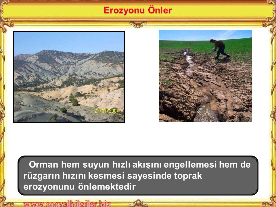 Erozyonu Önler Orman hem suyun hızlı akışını engellemesi hem de rüzgarın hızını kesmesi sayesinde toprak erozyonunu önlemektedir.