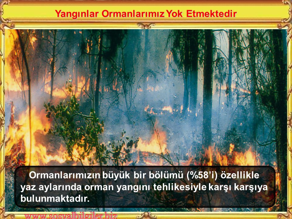 Yangınlar Ormanlarımız Yok Etmektedir