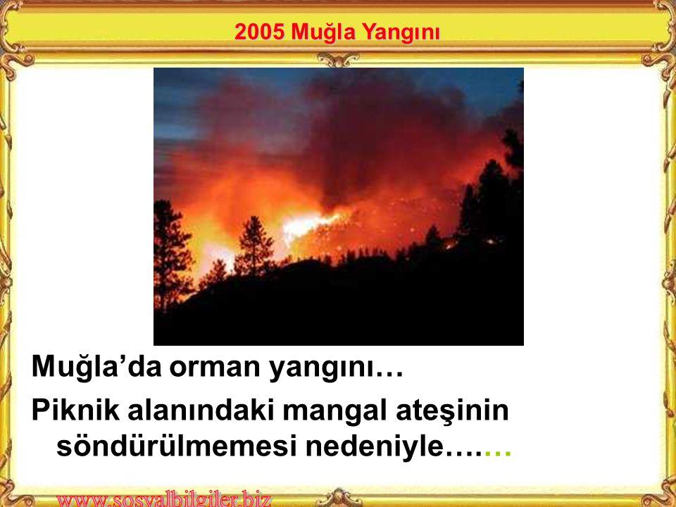 Muğla'da orman yangını…