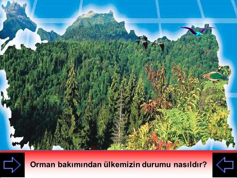 Orman bakımından ülkemizin durumu nasıldır