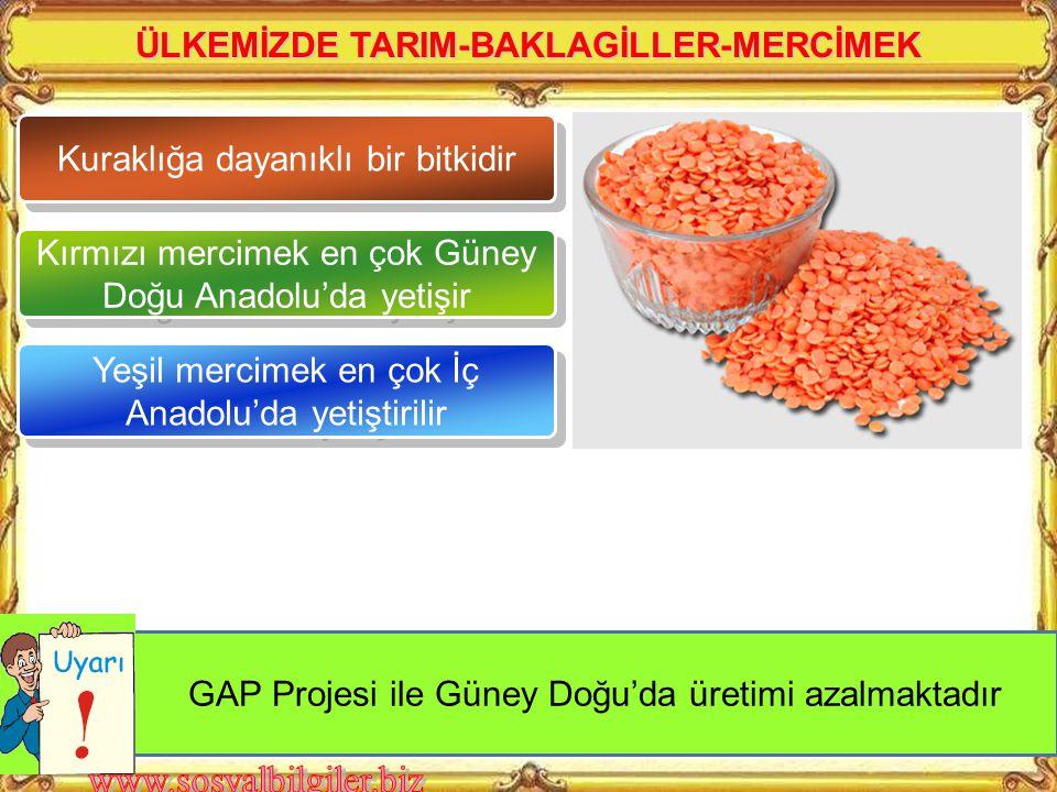 ÜLKEMİZDE TARIM-BAKLAGİLLER-MERCİMEK