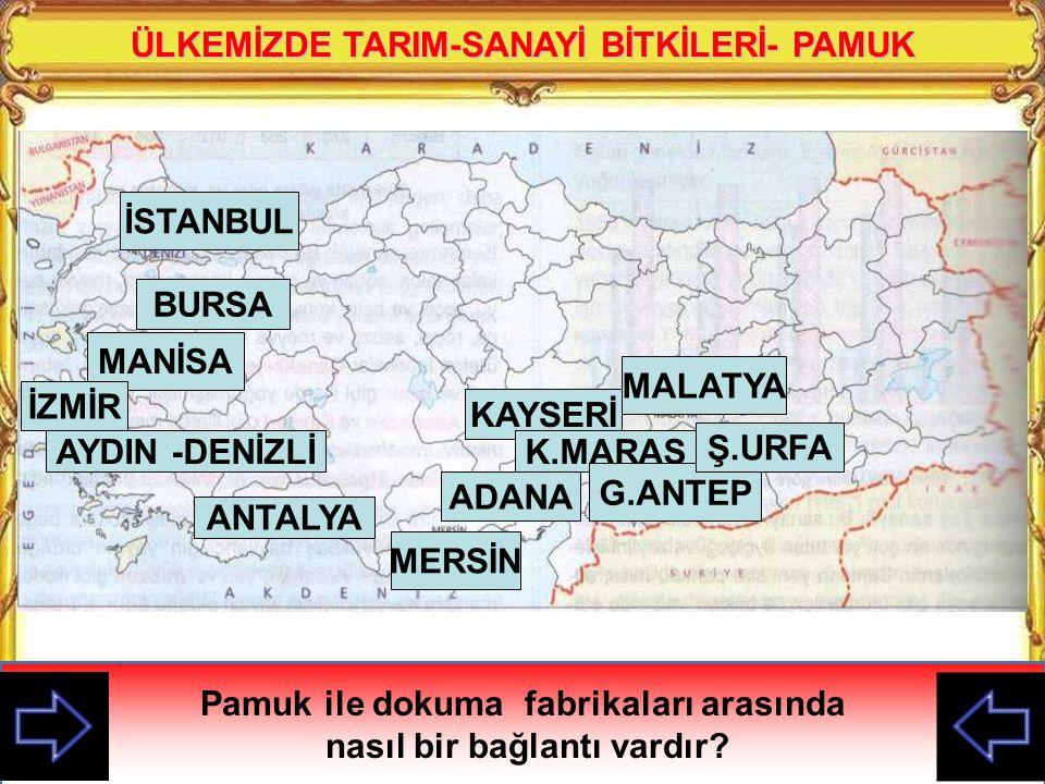 ÜLKEMİZDE TARIM-SANAYİ BİTKİLERİ- PAMUK