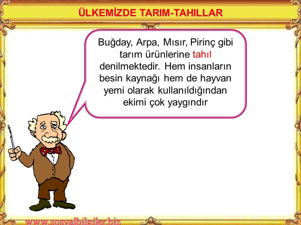 ÜLKEMİZDE TARIM-TAHILLAR
