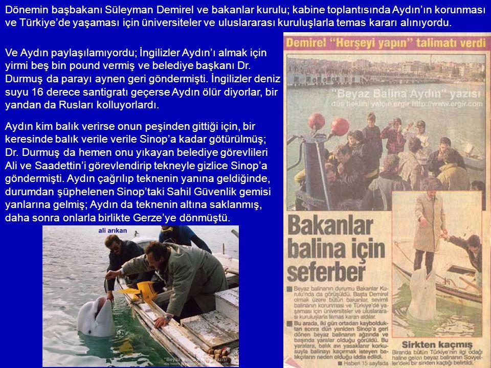 Dönemin başbakanı Süleyman Demirel ve bakanlar kurulu; kabine toplantısında Aydın'ın korunması ve Türkiye'de yaşaması için üniversiteler ve uluslararası kuruluşlarla temas kararı alınıyordu.
