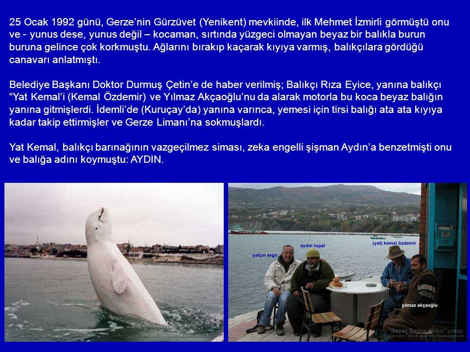 25 Ocak 1992 günü, Gerze'nin Gürzüvet (Yenikent) mevkiinde, ilk Mehmet İzmirli görmüştü onu ve - yunus dese, yunus değil – kocaman, sırtında yüzgeci olmayan beyaz bir balıkla burun buruna gelince çok korkmuştu. Ağlarını bırakıp kaçarak kıyıya varmış, balıkçılara gördüğü canavarı anlatmıştı.