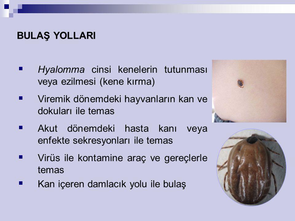 BULAŞ YOLLARI Hyalomma cinsi kenelerin tutunması veya ezilmesi (kene kırma) Viremik dönemdeki hayvanların kan ve dokuları ile temas.