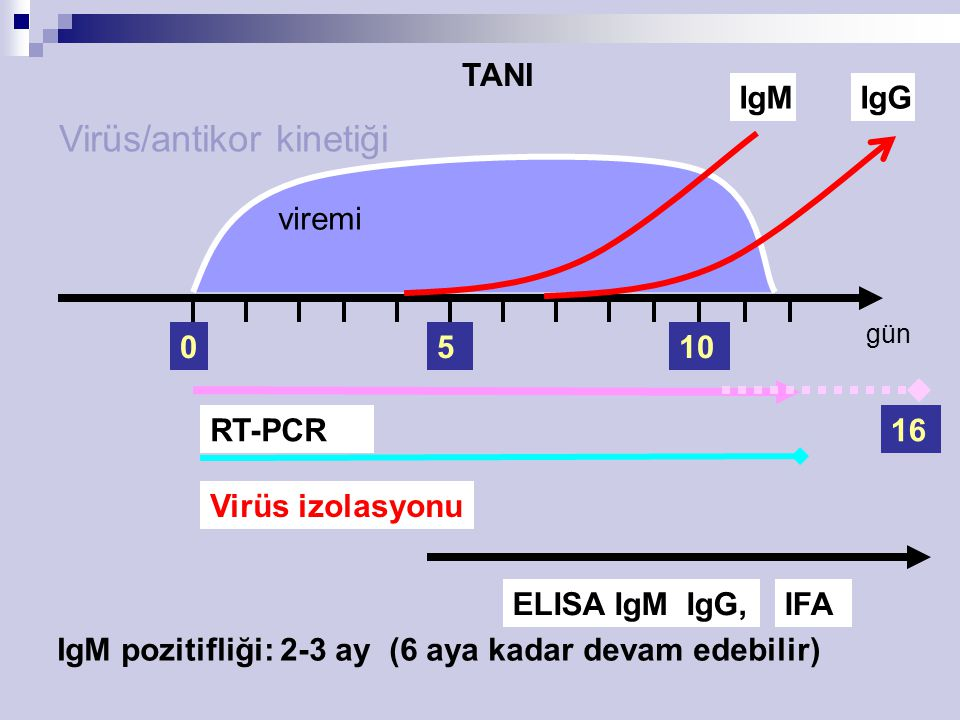 Virüs/antikor kinetiği