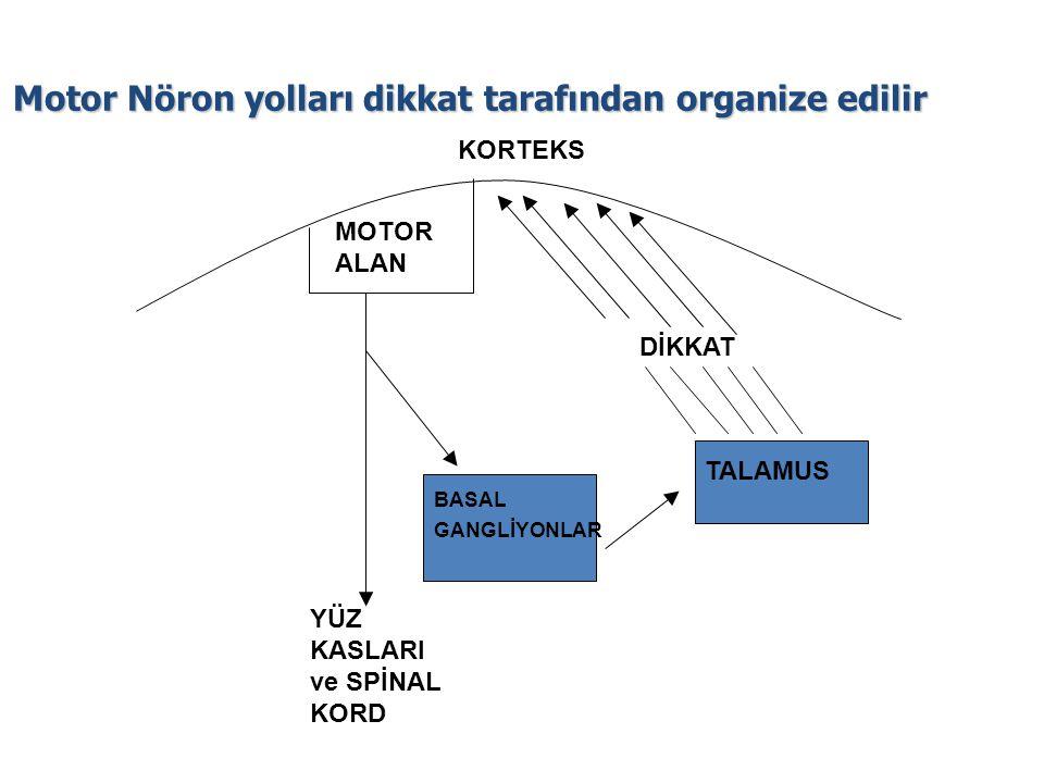 Motor Nöron yolları dikkat tarafından organize edilir