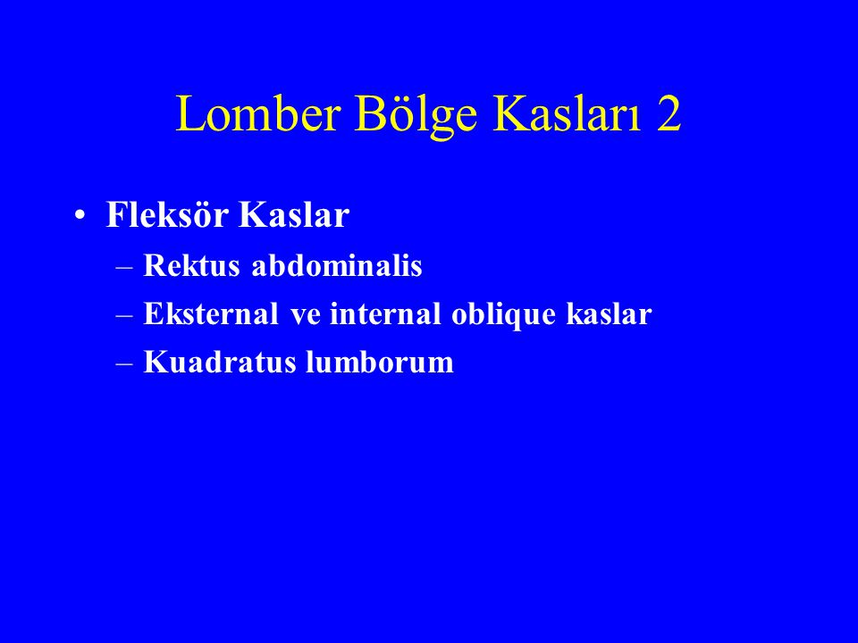 Lomber Bölge Kasları 2 Fleksör Kaslar Rektus abdominalis