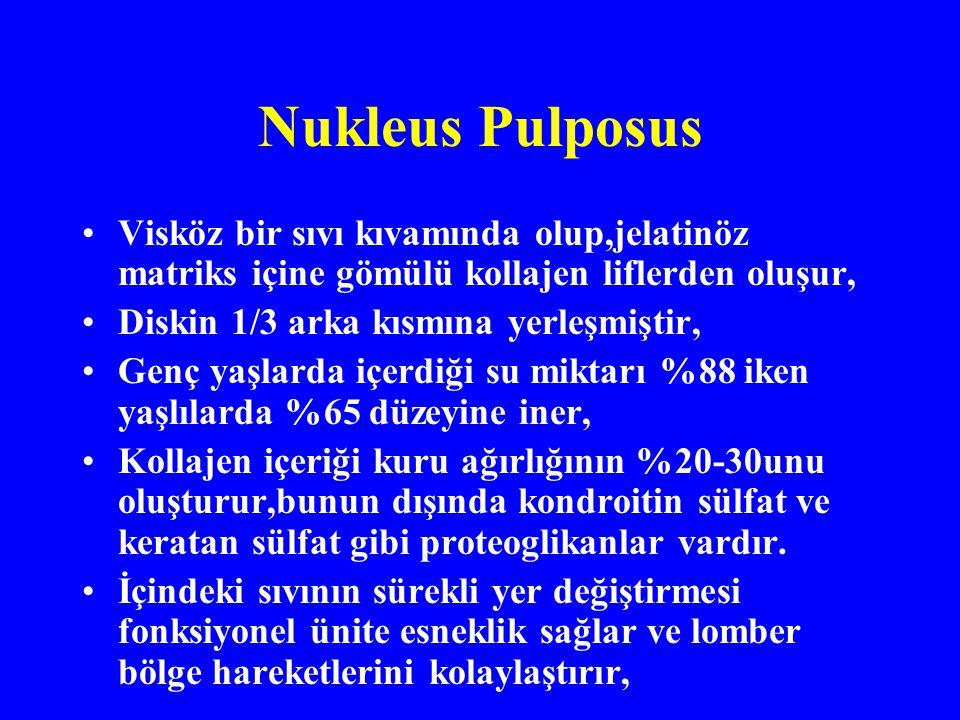Nukleus Pulposus Visköz bir sıvı kıvamında olup,jelatinöz matriks içine gömülü kollajen liflerden oluşur,
