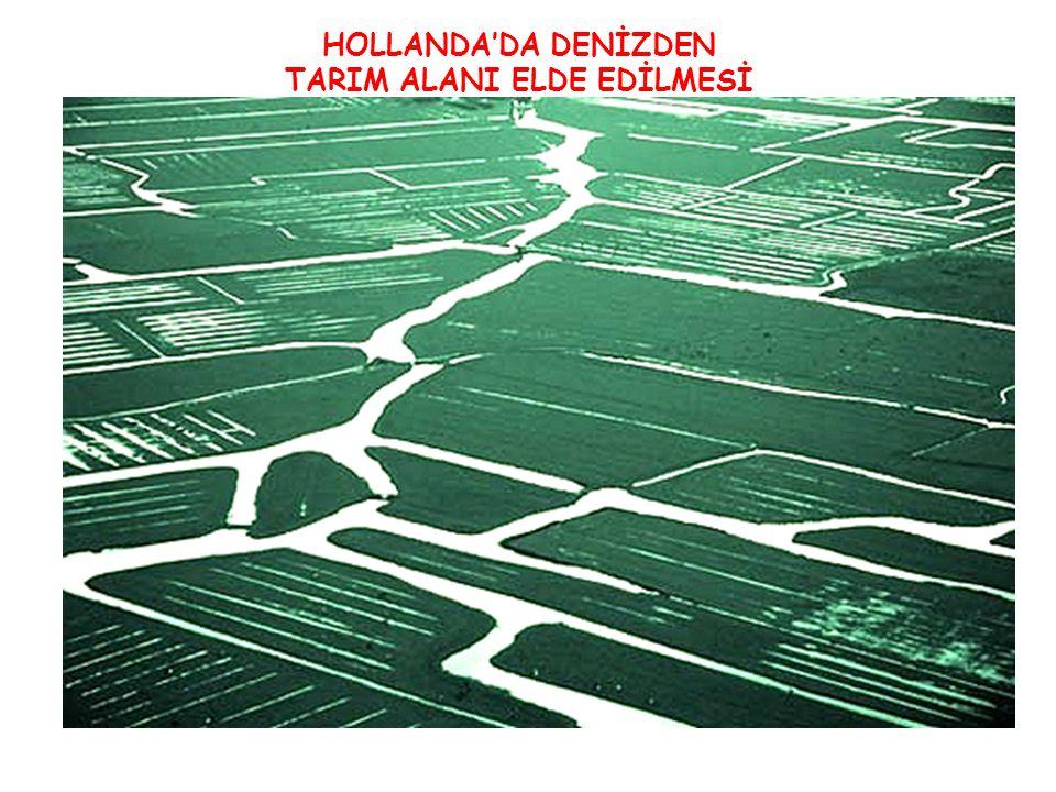 HOLLANDA'DA DENİZDEN TARIM ALANI ELDE EDİLMESİ