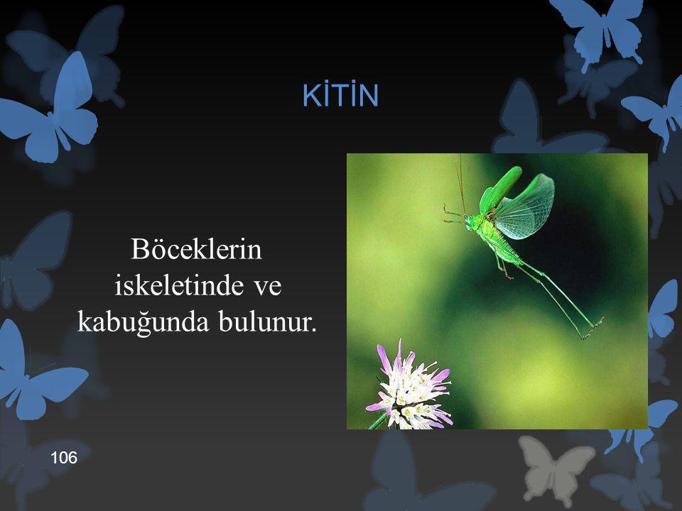 Böceklerin iskeletinde ve kabuğunda bulunur.