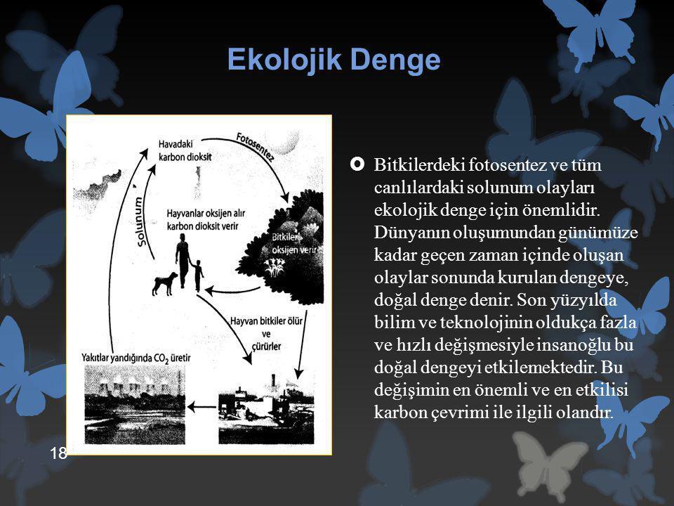Ekolojik Denge