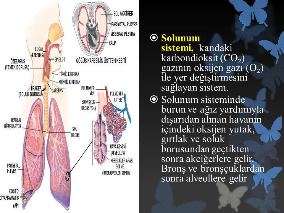 Solunum sistemi, kandaki karbondioksit (CO2) gazının oksijen gazı (O2) ile yer değiştirmesini sağlayan sistem.