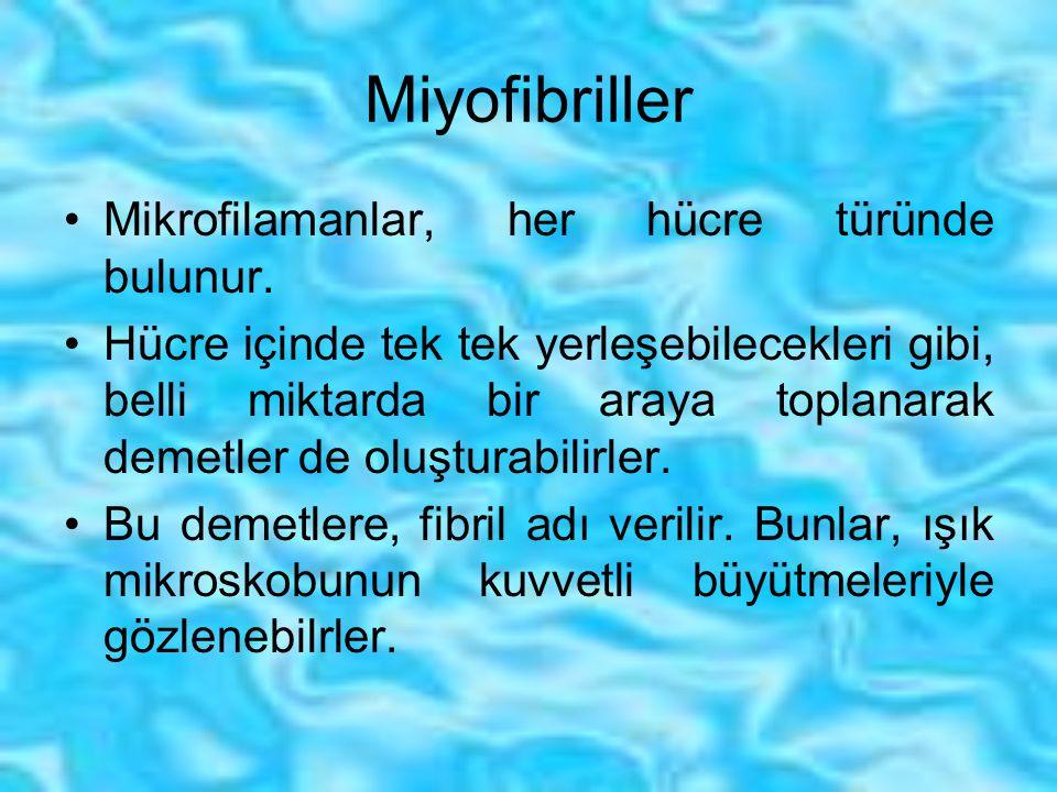 Miyofibriller Mikrofilamanlar, her hücre türünde bulunur.