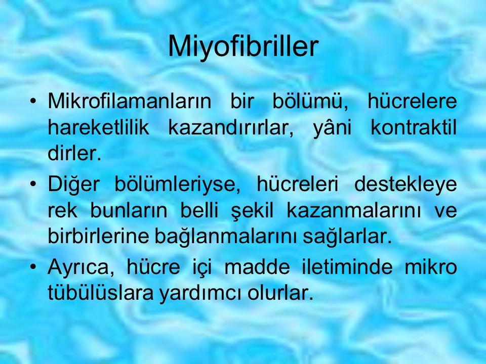 Miyofibriller Mikrofilamanların bir bölümü, hücrelere hareketlilik kazandırırlar, yâni kontraktil dirler.