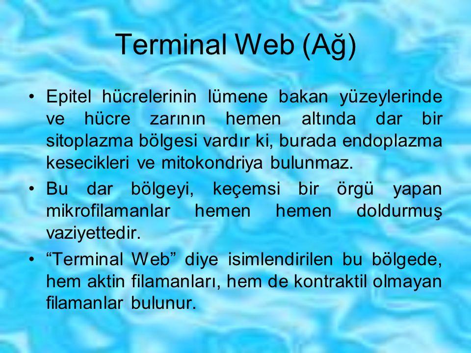 Terminal Web (Ağ)
