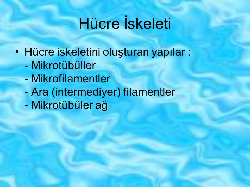 Hücre İskeleti Hücre iskeletini oluşturan yapılar : - Mikrotübüller - Mikrofilamentler - Ara (intermediyer) filamentler - Mikrotübüler ağ.