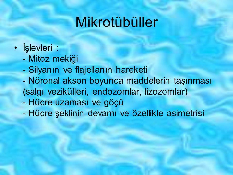 Mikrotübüller