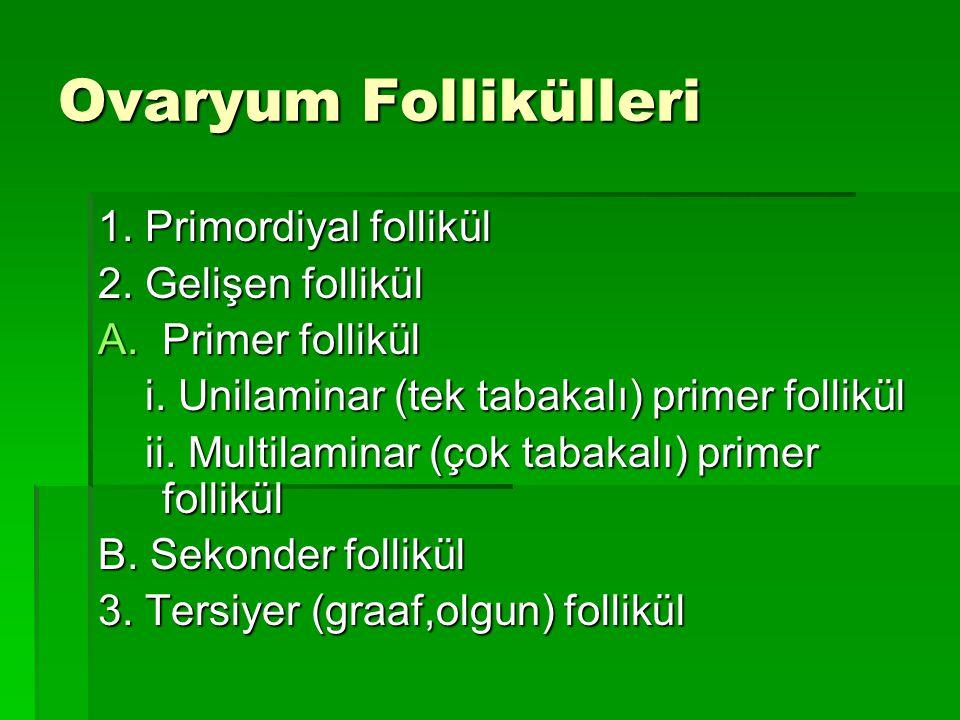 Ovaryum Follikülleri 1. Primordiyal follikül 2. Gelişen follikül