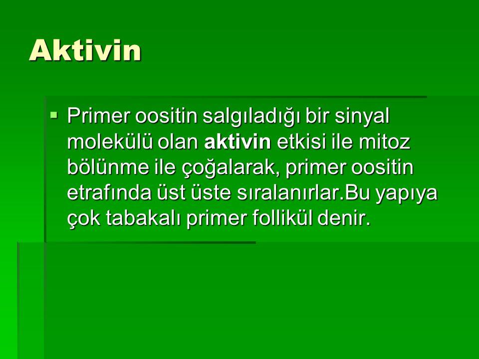 Aktivin