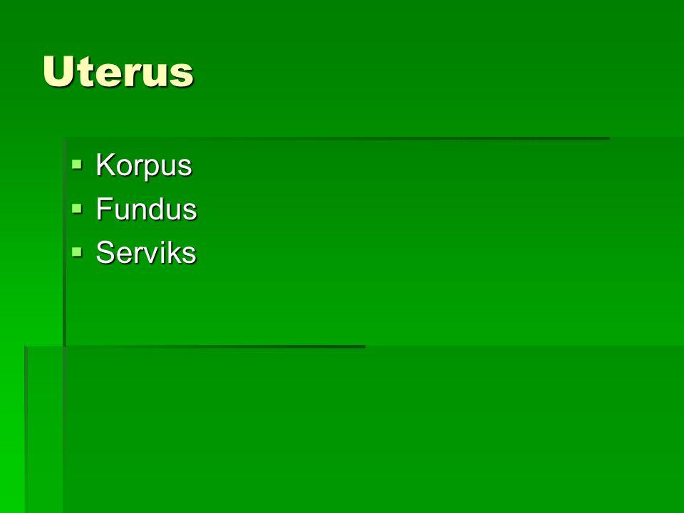 Uterus Korpus Fundus Serviks