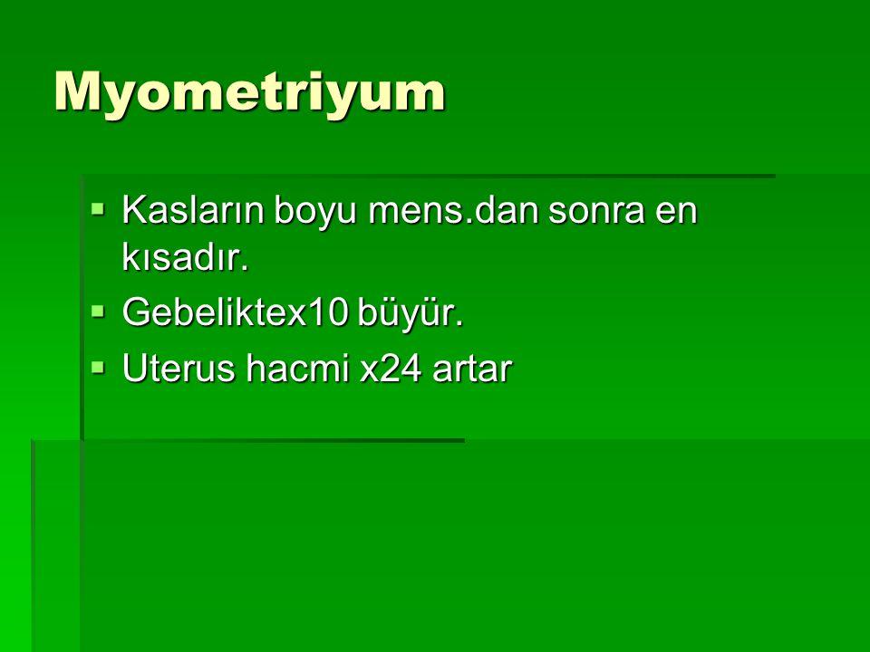 Myometriyum Kasların boyu mens.dan sonra en kısadır.