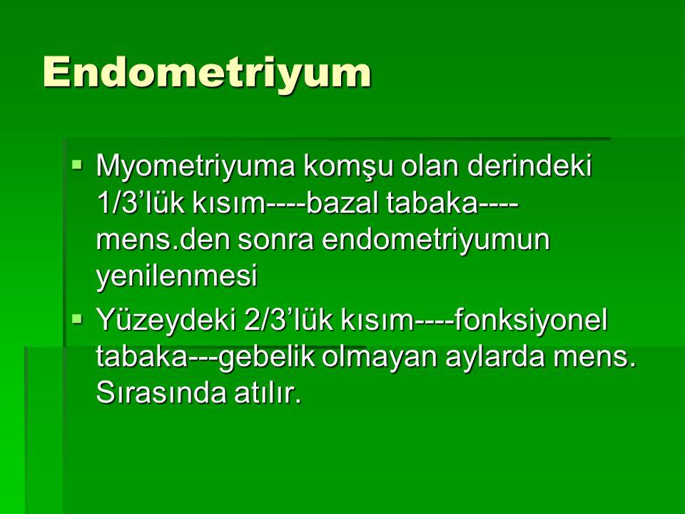 Endometriyum Myometriyuma komşu olan derindeki 1/3'lük kısım----bazal tabaka---- mens.den sonra endometriyumun yenilenmesi.