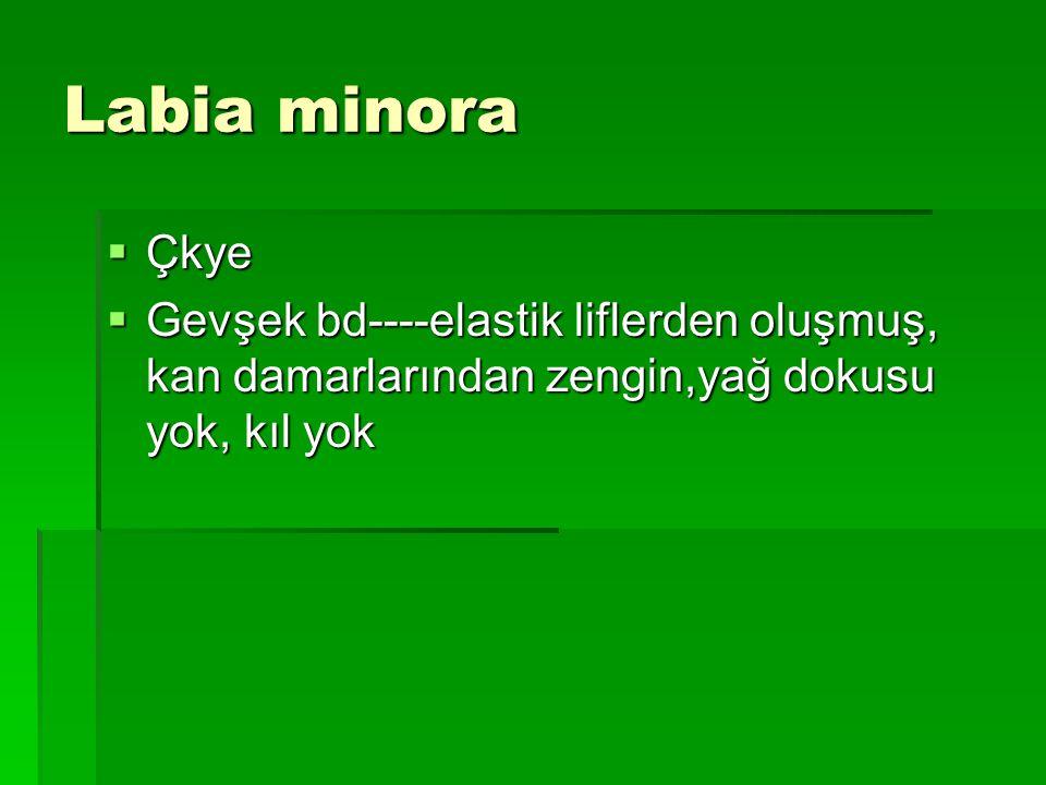 Labia minora Çkye.