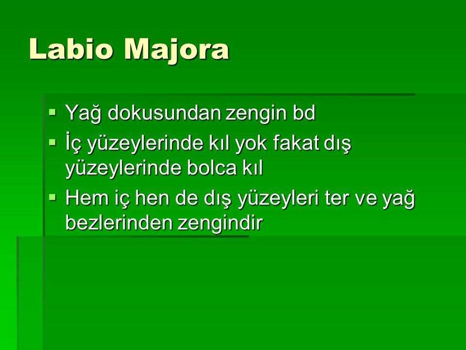 Labio Majora Yağ dokusundan zengin bd