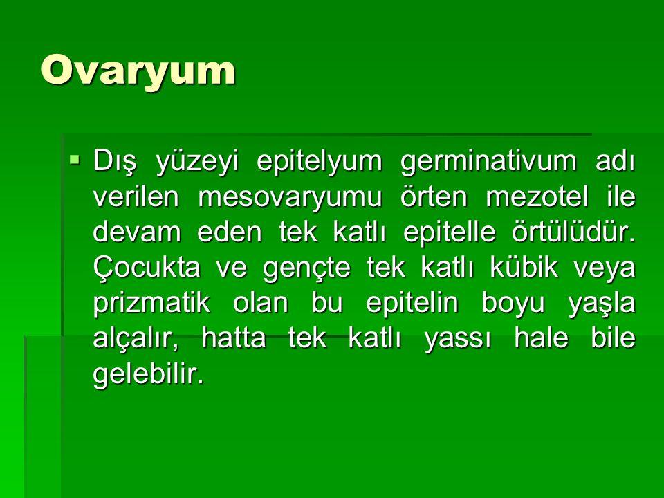 Ovaryum