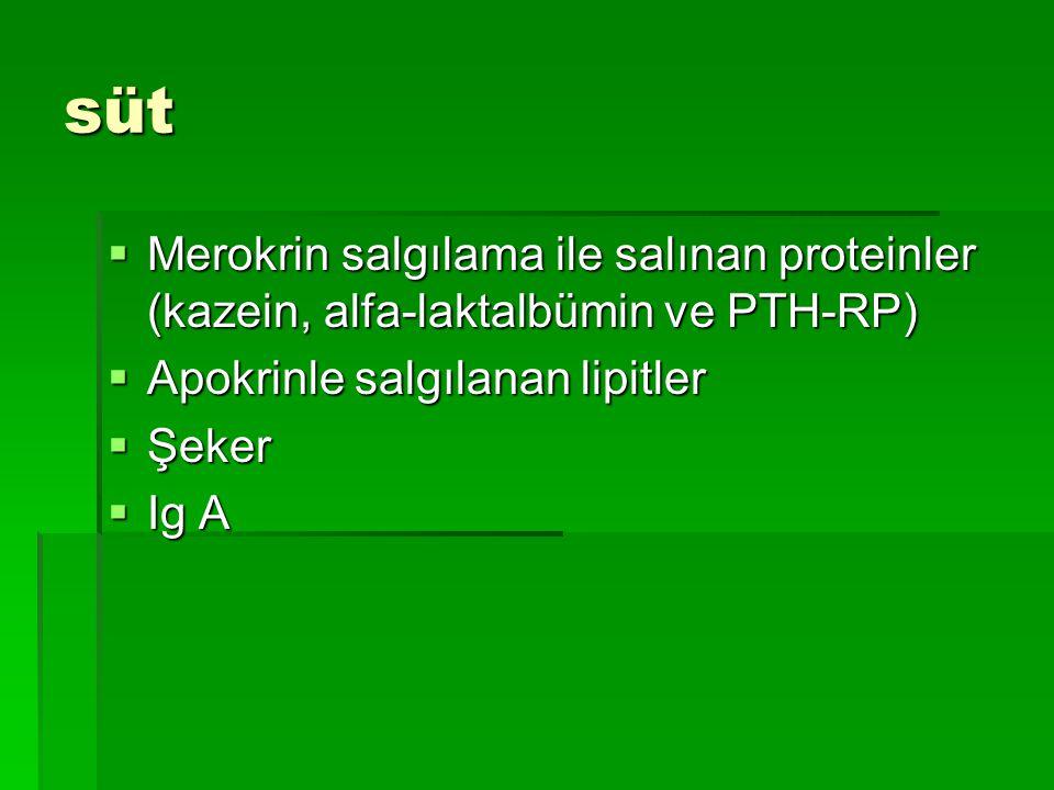 süt Merokrin salgılama ile salınan proteinler (kazein, alfa-laktalbümin ve PTH-RP) Apokrinle salgılanan lipitler.