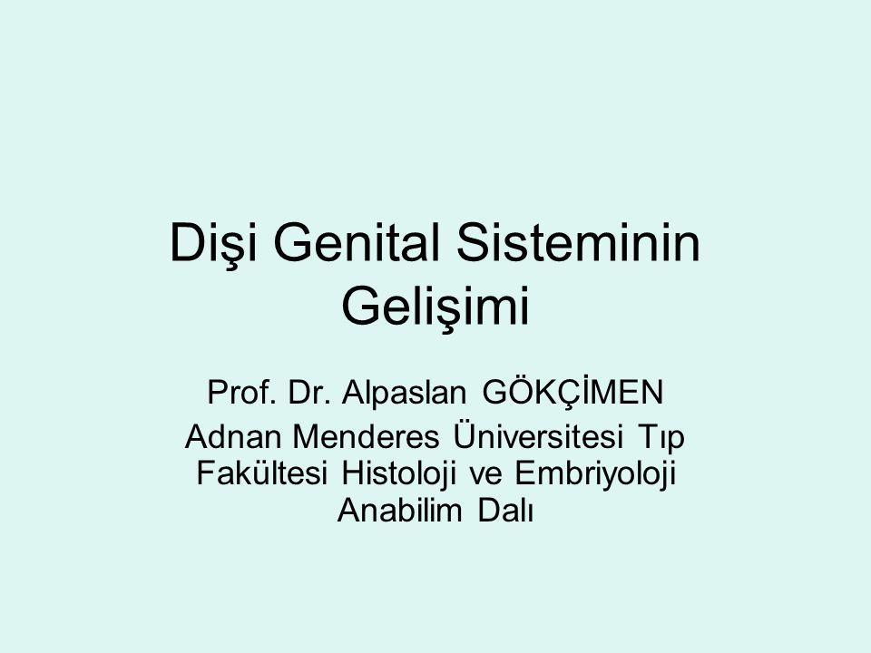 Dişi Genital Sisteminin Gelişimi