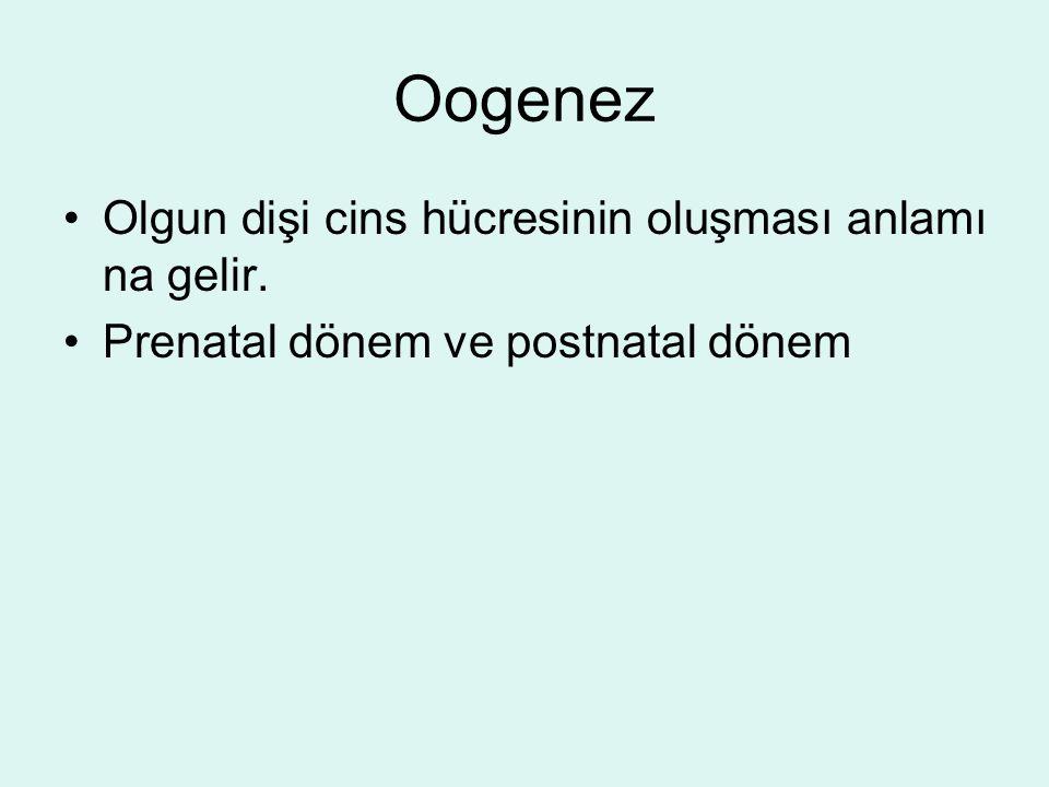 Oogenez Olgun dişi cins hücresinin oluşması anlamı na gelir.