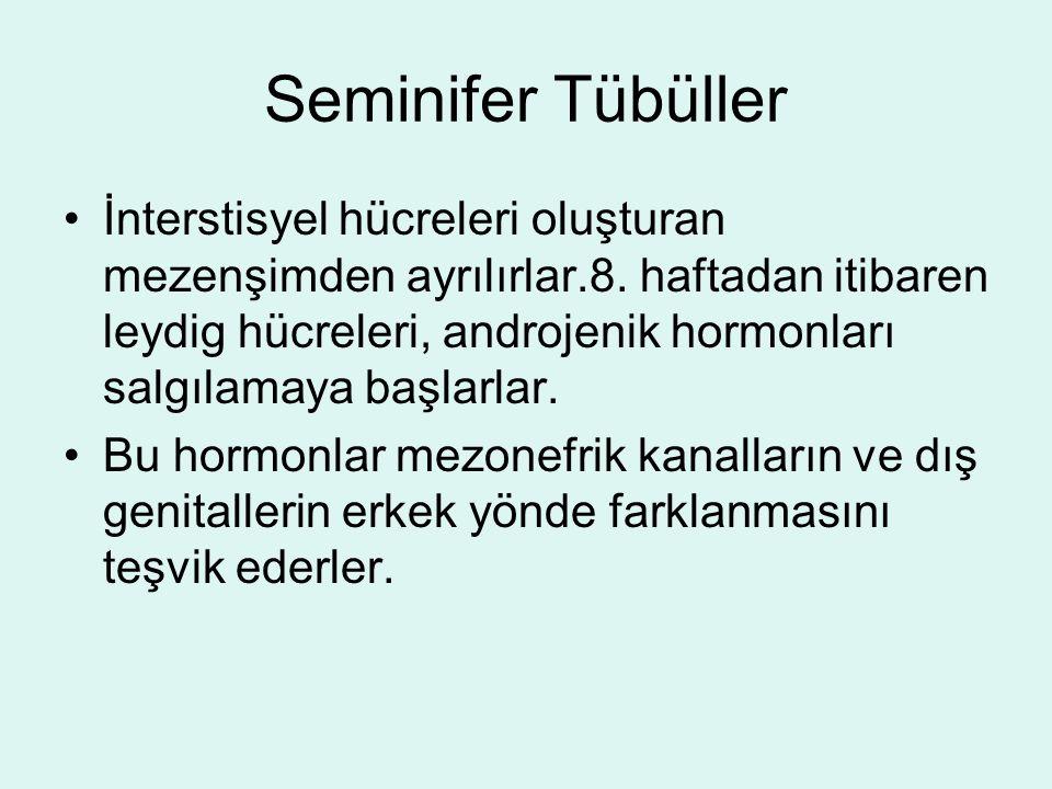Seminifer Tübüller