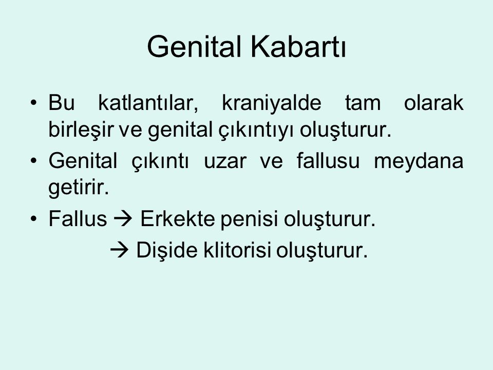 Genital Kabartı Bu katlantılar, kraniyalde tam olarak birleşir ve genital çıkıntıyı oluşturur. Genital çıkıntı uzar ve fallusu meydana getirir.