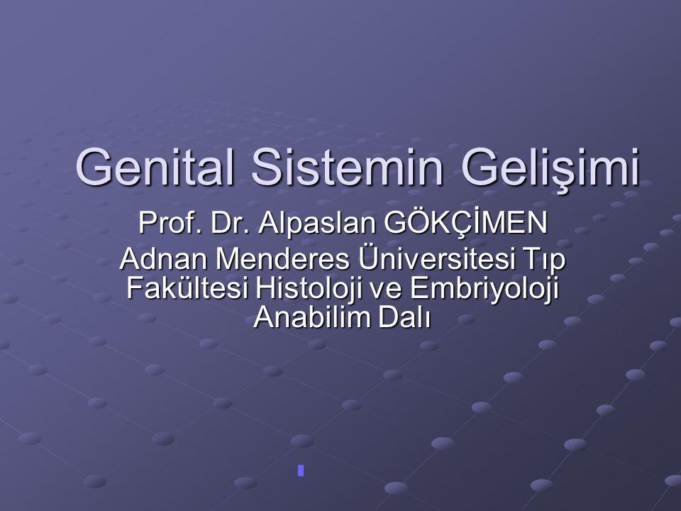 Genital Sistemin Gelişimi