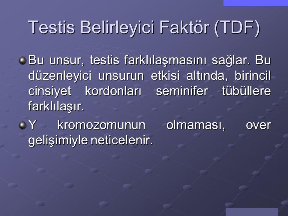 Testis Belirleyici Faktör (TDF)