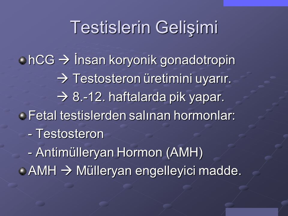 Testislerin Gelişimi hCG  İnsan koryonik gonadotropin