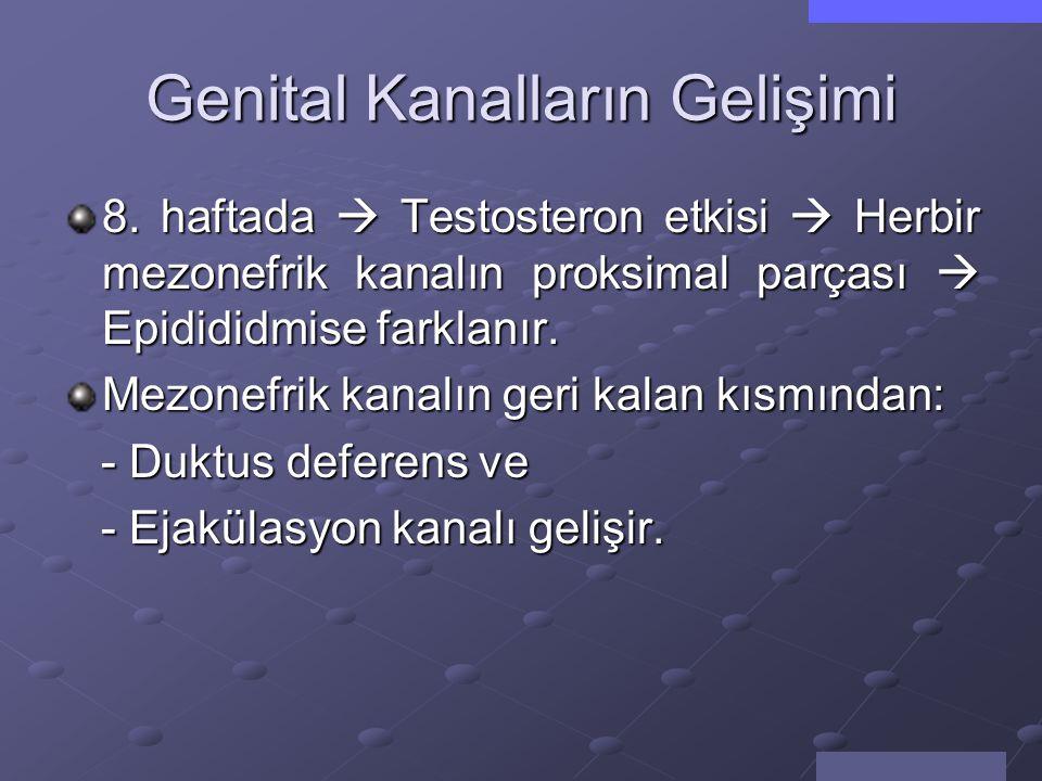 Genital Kanalların Gelişimi