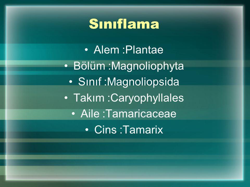 Takım :Caryophyllales