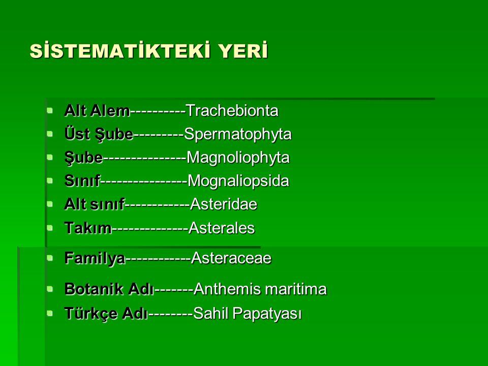 SİSTEMATİKTEKİ YERİ Alt Alem----------Trachebionta