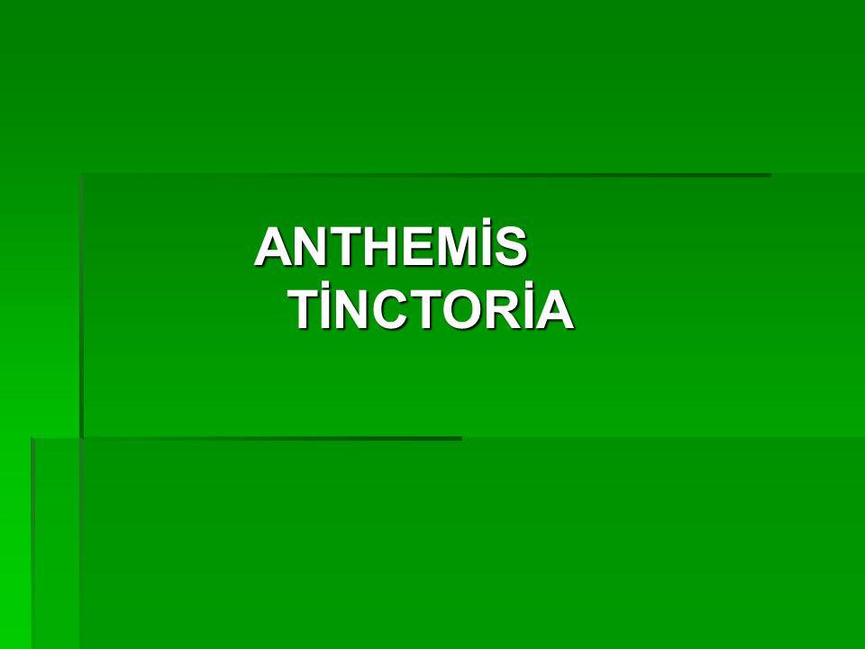 ANTHEMİS TİNCTORİA