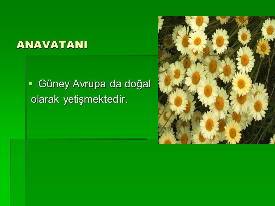 ANAVATANI Güney Avrupa da doğal olarak yetişmektedir.